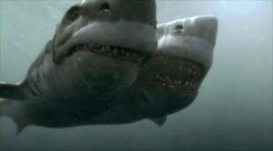 As-tu remarqué les 6000 dents dans les gueules des requins?