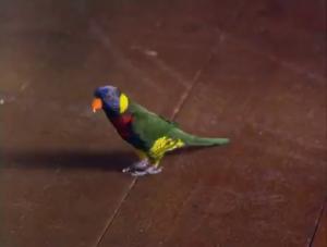 Sa co-vedette est un ptit oiseau vraiment trop cute