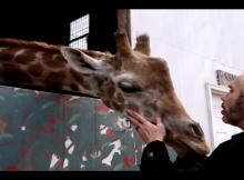 matt-hardy-george-washington-girafe